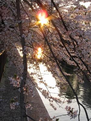 2011,4,daizo 032.jpg